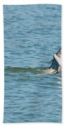 Fish On Beach Towel