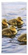 Five Goslings In The Water Beach Towel