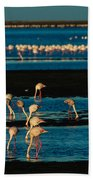 Flamingo Gathering Beach Towel