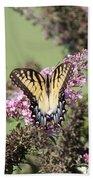 Flitter - Butterfly - Swallowtail Beach Towel