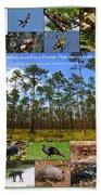 Florida Wildlife Photo Collage Beach Towel