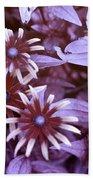 Flower Rudbeckia Fulgida In Uv Light Beach Towel by Ted Kinsman