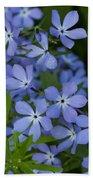 Flower Wild Blue Phlox 1 B Beach Towel