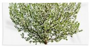 Flowering Apple Tree Beach Sheet