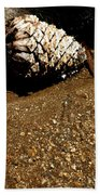 Fools Gold And Pine Cone Beach Towel