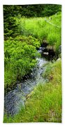 Forest Creek In Newfoundland Beach Towel