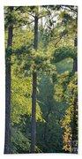 Forest Illumination At Sunset Beach Towel