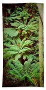 Forest Of Ferns Beach Towel