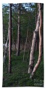 Forest, Shore Of Lake Superior Beach Towel