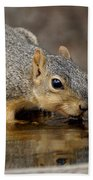 Fox Squirrel Beach Towel
