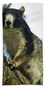 Fox Squirrel Beach Towel by Phill Doherty