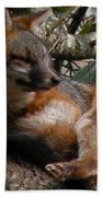 Foxy's Naptime Beach Towel