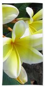 Frangipani Up Close Beach Towel