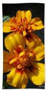 French Marigold Named Starfire Beach Towel