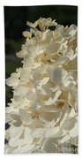 French Vanilla Hydrangea Beach Towel