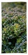 Fresh Broccoli Beach Towel by Susan Herber