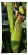 Fresh Corn On The Cob Beach Towel