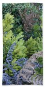 Fresh Young Redwoods On Mt Tamalpais Beach Towel
