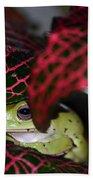 Frog On A Leaf Beach Towel
