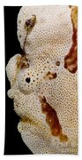 Frogfish Face Beach Towel