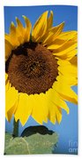 Full Sunflower Beach Towel
