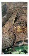 Galapagos Giant Tortoise Beach Towel