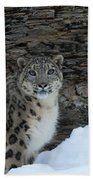Gaze Of The Snow Leopard Beach Towel