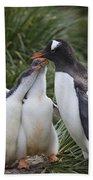Gentoo Penguin Parent And Two Chicks Beach Towel