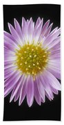 Gerber Daisy In Black Background Beach Towel