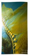 Giant Kelp, Catalina Island, California Beach Towel