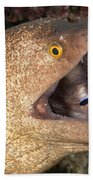 Giant Moray Eel And Cleaner Wrasse Beach Towel