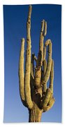 Giant Saguaro Cactus Portrait With Blue Sky Beach Towel