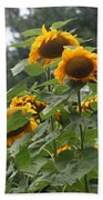 Giant Sunflowers Beach Towel