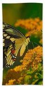 Giant Swallowtail On Goldenrod Beach Towel
