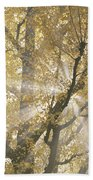 Ginkgo Tree With Sunlight Streaming Beach Towel