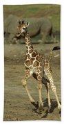Giraffe Giraffa Camelopardalis Juvenile Beach Towel