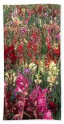 Gladioli Garden In Early Fall Beach Towel