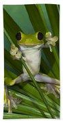 Gliding Leaf Frog Agalychnis Spurrelli Beach Towel
