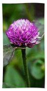 Globe Amaranth Bicolor Rose Beach Towel