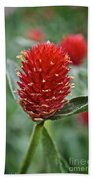 Globe Amaranth Beach Towel