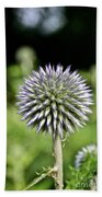 Globe Thistle Beach Towel