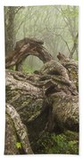 Gnarly Old Tree In Fog Along The Blue Ridge Parkway Beach Towel by Bill Swindaman