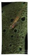 Goby On A Sponge, Fiji Beach Towel