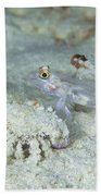 Goby With A Hermit Crab, Australia Beach Towel