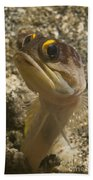 Gold-speck Jawfish Pouting, North Beach Towel