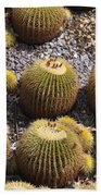 Golden Barrel Cactus 2 Beach Towel