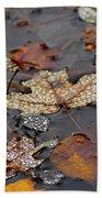 Golden Maple Dew Drops Beach Towel