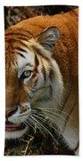 Golden Tabby Bengal Tiger Beach Towel