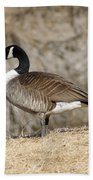 Goose Standing Still Beach Towel