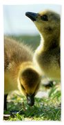Goslings 6 Beach Towel